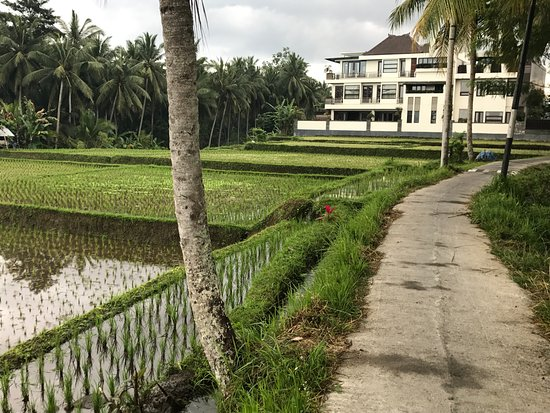 Path To Luxe Villas Picture Of Luxe Villas Bali Ubud Tripadvisor