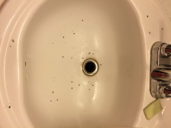 Palmyra, PA: the dead bugs in the bathroom sink
