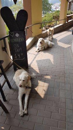 Kamloops, Canada: Very, dog friendly