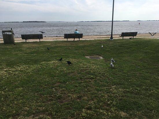 Southport Pier and RIverwalk: Birds
