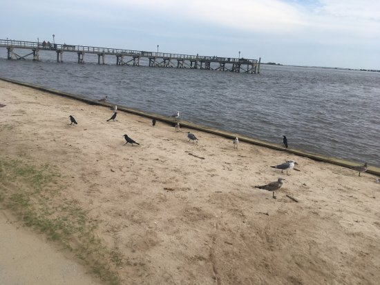 Southport Pier and RIverwalk: Birds and ocean