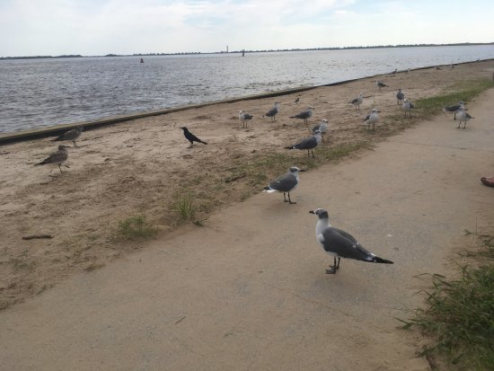 Southport Pier and RIverwalk: Birds