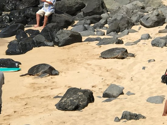 Paia, Χαβάη: photo1.jpg