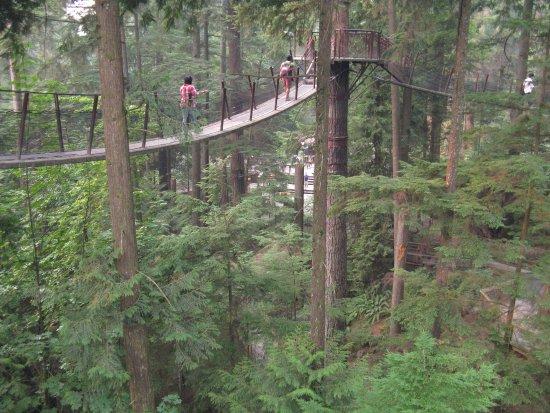 North Vancouver, Canada: Treetop Adventure