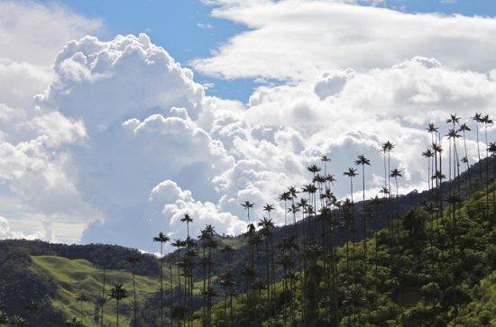 Salento to Cocora Valley and Ocaso...