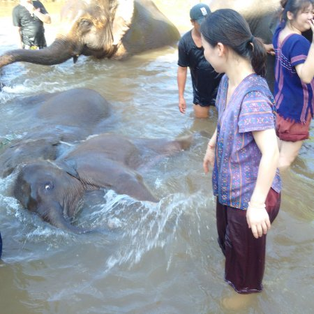 Ran-Tong Save & Rescue Elephant Centre : Enjoying the water