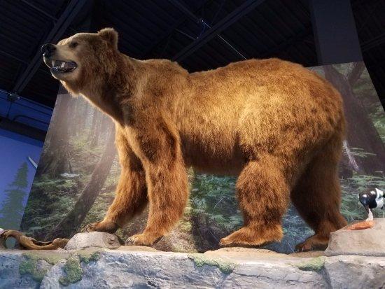 Kenai National Wildlife Refuge : Great indoor exhibit of Alaskan animals