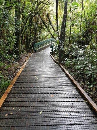 Opononi, Nueva Zelanda: path
