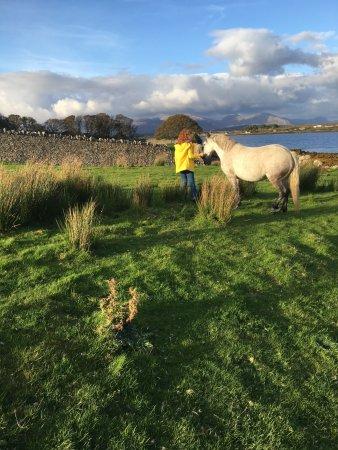 County Galway, Ireland: photo0.jpg