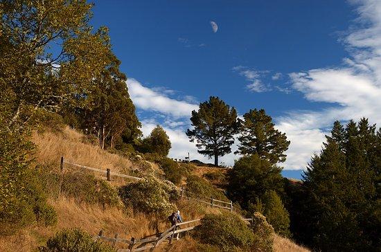 Mill Valley, CA: fern Creek Trail