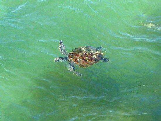 Shark Bay Coastal Tours Tripadvisor