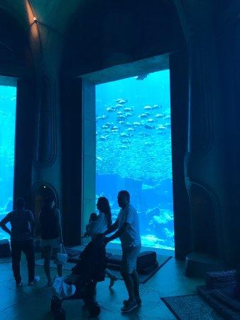 The Lost Chambers Aquarium: photo2.jpg
