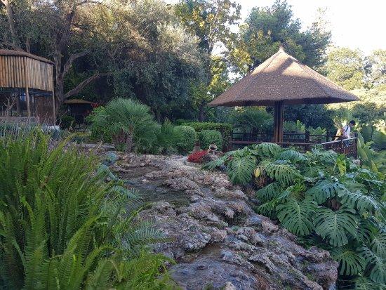 Jardin Botanico Molino De Inca: Оазис