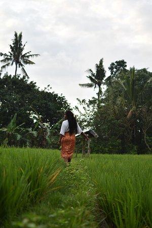 Komaneka at Monkey Forest: Mini rice paddy on the hotel grounds