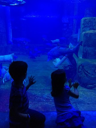 Aqua Vega Aquarium (Ankara, Turkey): Top Tips Before You ...