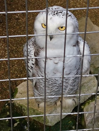 Ryde, UK: Very cute owl with fluffy feet
