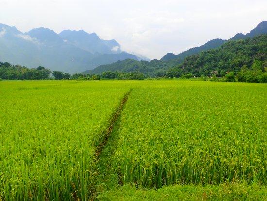 Mai Chau, Vietnam: Mountain views through rice fields