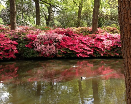 Richmond, UK: earlier one of Isabella Plantation