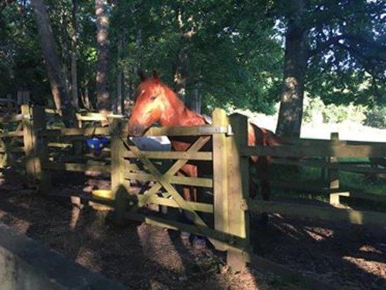 Ringwood, UK: horse pen