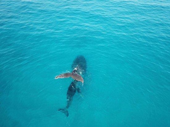 Vilanculos, Mozambique: Bazaruto whale watching