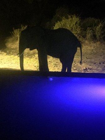 Elephant Valley Lodge: photo2.jpg