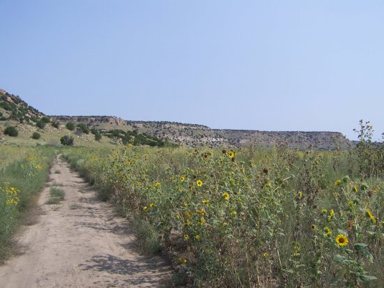La Junta, CO: lots of growth to walk by and through