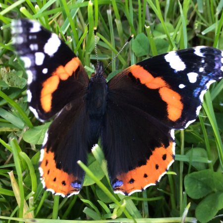 West Kirby, UK: Butterfly