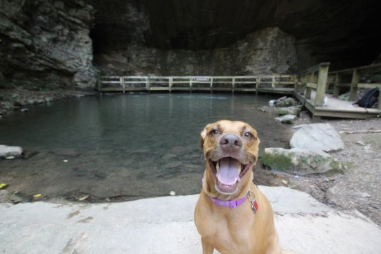 Summerville, Джорджия: Sarah & I brought Molly to the park. She enjoyed it thoroughly.