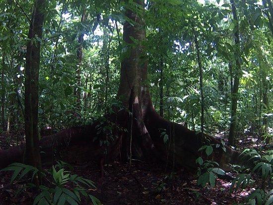 Drake Bay, Costa Rica: photo0.jpg