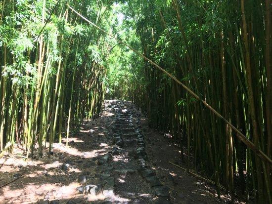 Pipiwai Trail Bambuswald Bilde Av Pipiwai Trail I Haleakala