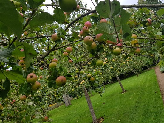 Chipping Campden, UK: The orchards