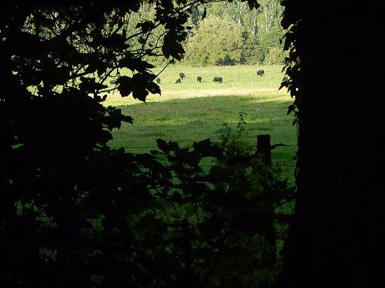 Lower Oddington, UK: Scene over graveyard wall