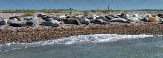 Bishop's Boats: Photo of seals from Bishop's Boat Trip