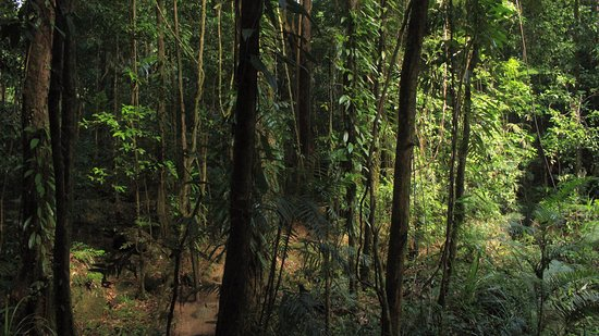 Daintree Region, Australia: Rainforest in Mossman gorge
