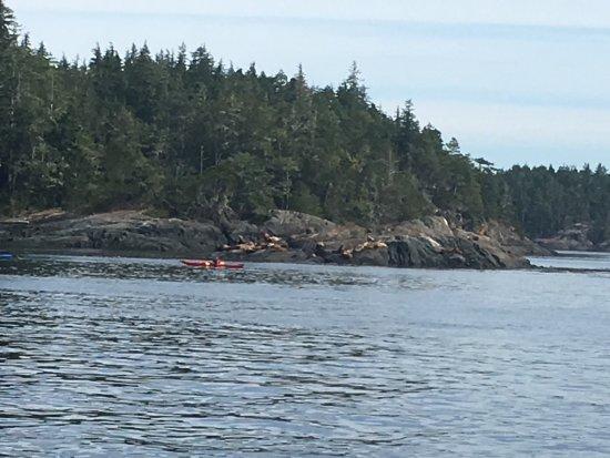 Port McNeill, Canadá: photo2.jpg