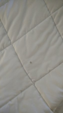 Baymont Inn and Suites Harrodsburg: Stain on Blanket