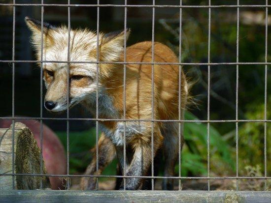 เบรนต์ฟอร์ด, แคนาดา: Brantford Twin Valley Zoo