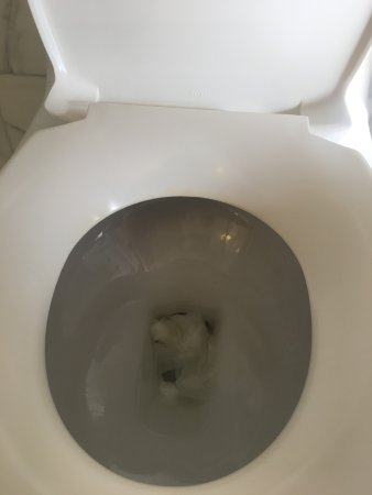 Berkeley Oceanfront Hotel Toilet Not Flushed From Previous Occupant Permanent Yellow Ring Around