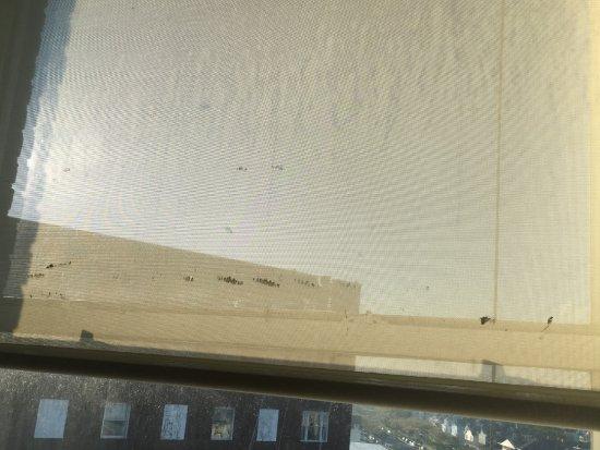 Asbury Park, NJ: Extremely dirty blind