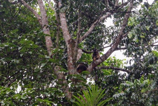 Malanda, Australia: Tree Kangaroos