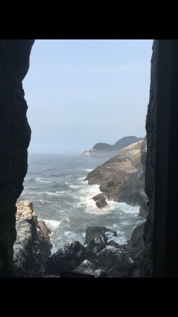 Sea Lion Caves-billede