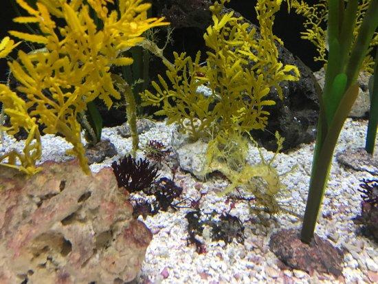 นิวพอร์ต, เคนตั๊กกี้: Newport Aquarium