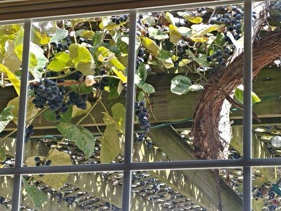Wakeman, OH: Matus Winery