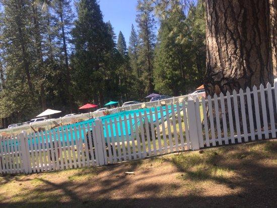 Foto de Big Trees Lodge
