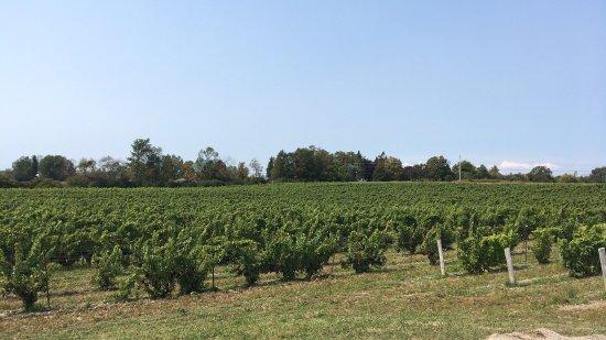 Hillier Creek Estates Winery: photo1.jpg