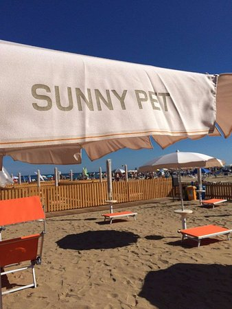 Sunny Pet Ufficio 19