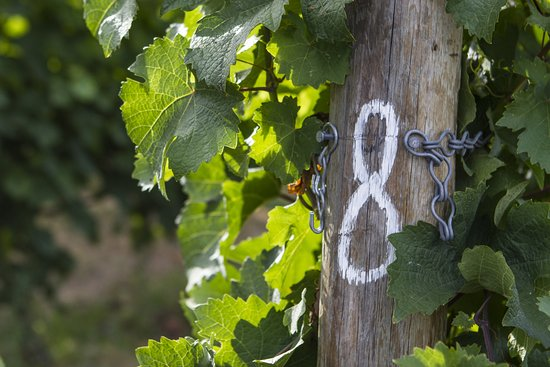 Lunessence Winery & Vineyard: Vineyard post