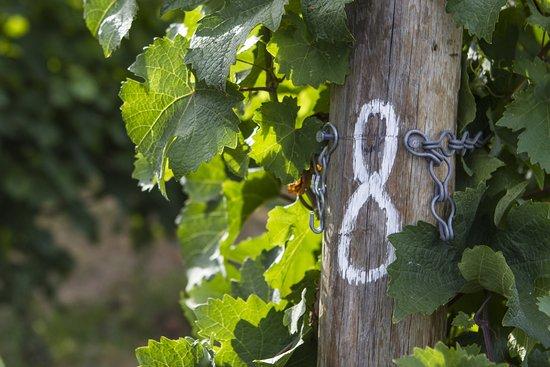Summerland, Kanada: Vineyard post