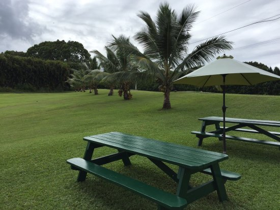 Pepeekeo, Hawái: Picnic Tables at What's Shakin'
