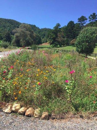 Hayesville, NC: Beautiful flowers